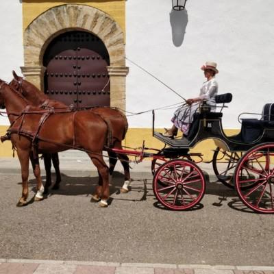 cordoba coche de caballo
